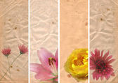 Lovely banners with floral elements — Stock Photo