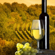 The bottle of wineyard in the background — Stockfoto
