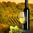 Stockfoto: The bottle of wineyard in the background