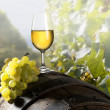 The glass of white wine — Stockfoto