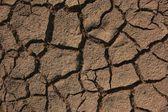 Dry soil — Stock Photo