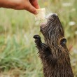 Otter — Stock Photo #2757865