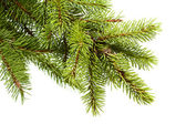 Christmas fir tree — 图库照片