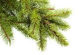 Fir kerstboom — Stockfoto