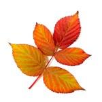 Hoja de otoño — Foto de Stock
