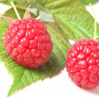 Raspberry — Stock Photo #2762831