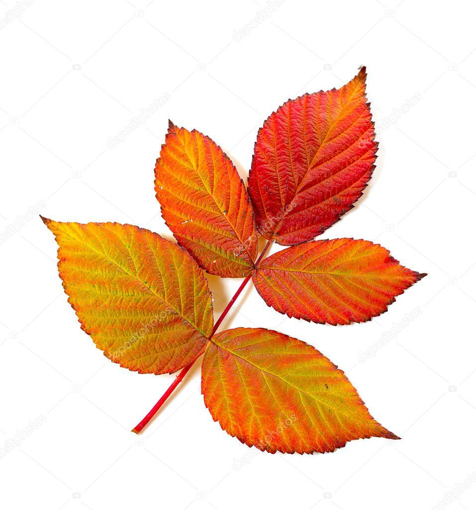 Осенний орнамент картинки