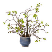 Patttern of young twigs — Stock Photo