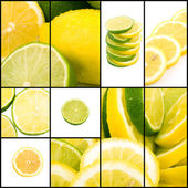 Lemon and lime collage — Stock Photo