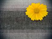 Tecido marrom e flor amarela — Fotografia Stock