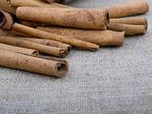 Cannella aromatica — Foto Stock