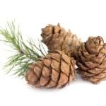 Cedar cones — Stock Photo #2957754