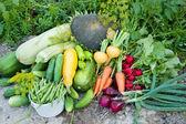 Crop of vegetables — Stock Photo