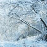 árvores e a neve do inverno — Foto Stock #2692821