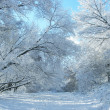 Winter snow and trees - Stock Photo