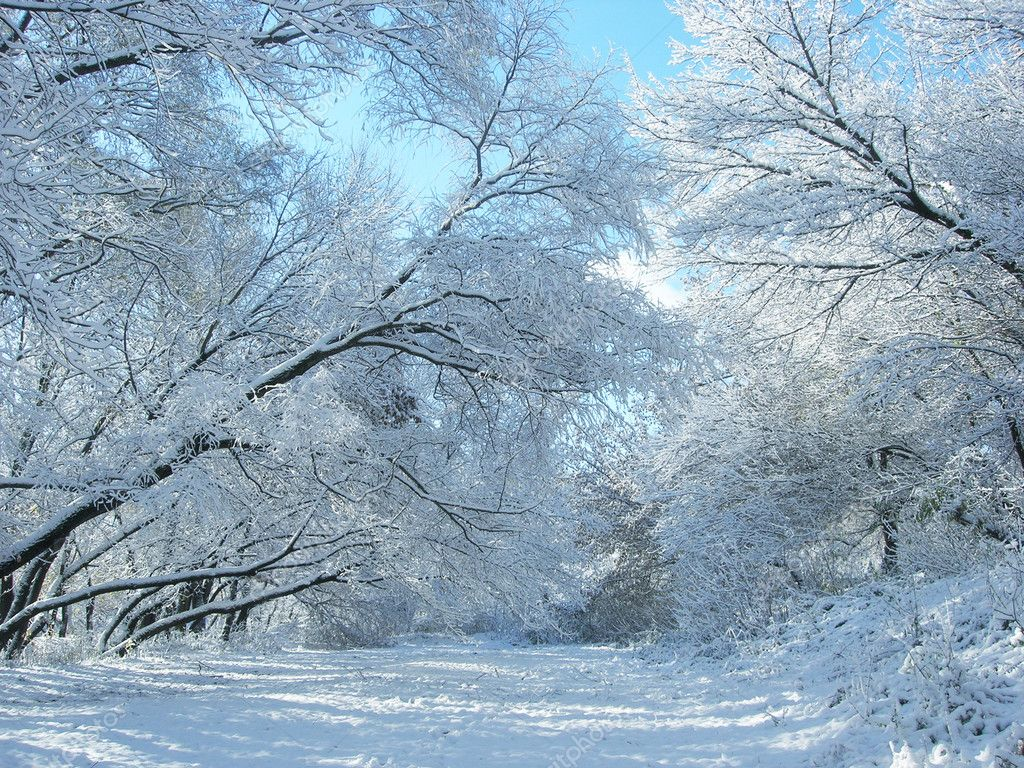 Winter snow and trees  — Foto Stock #2692855