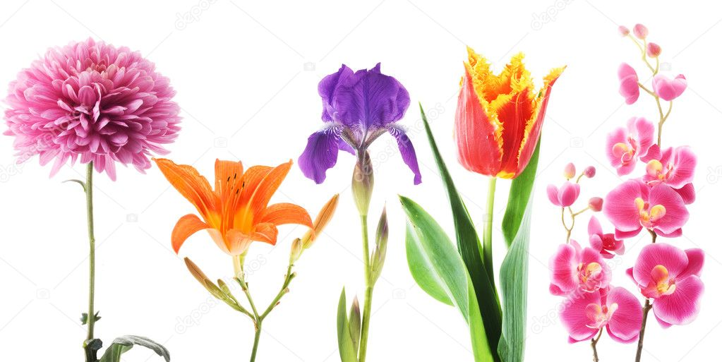 Set of flowers on a white background — Stock Photo #2737779