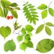 Set of green leaf - Stock Photo