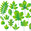 Set of green leaf — Stock Vector