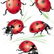 Stock Vector: Set of ladybird