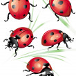 Set of ladybird - Stock Vector