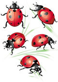 Set of ladybird — Stock Vector