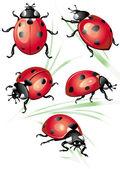 Set of ladybird — Stock Vector