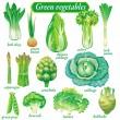 Green vegetables — Stock Vector