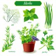 Stock Vector: Herbs