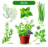 Herbs — Stock Vector