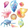 Stock Vector: Colored seashell