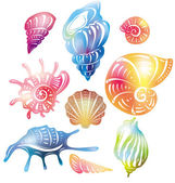 Colored seashell — Stock Vector