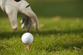 Human hand positioning golf ball on tee, close-up — Zdjęcie stockowe