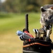 Golf clubs in bag at golf course, close-up - ストック写真