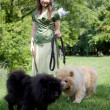 Young woman with dogs in park — Stock Photo