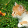 Red kitten with a butterfly - Stock Photo