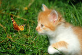 Red kitten with a butterfly — Stock Photo