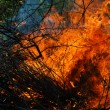 Trees afire — Stock Photo
