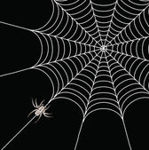 Spider and a web on a black background — Stock Photo
