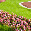 Foto Stock: Beautiful lawn. Landscape design