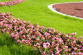 Beautiful lawn. Landscape design — 图库照片