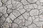 Cracked soil — Stock Photo