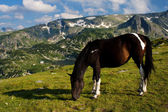 Horse in mountain — Stock Photo