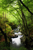 Stream in forest — Stock Photo