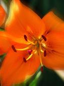 Orange Sterne. — Stockfoto