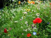 Květina glade. — Stock fotografie