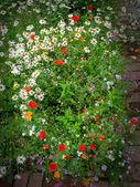 Glade flor. — Foto de Stock