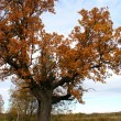 Autumn oak. — Stock Photo