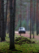 Jesienią drewna. — Zdjęcie stockowe