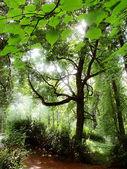 La madera del sol. — Foto de Stock